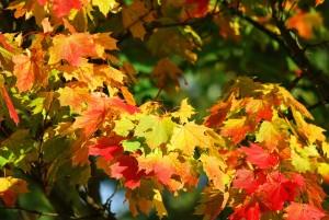 autumn-209479_640